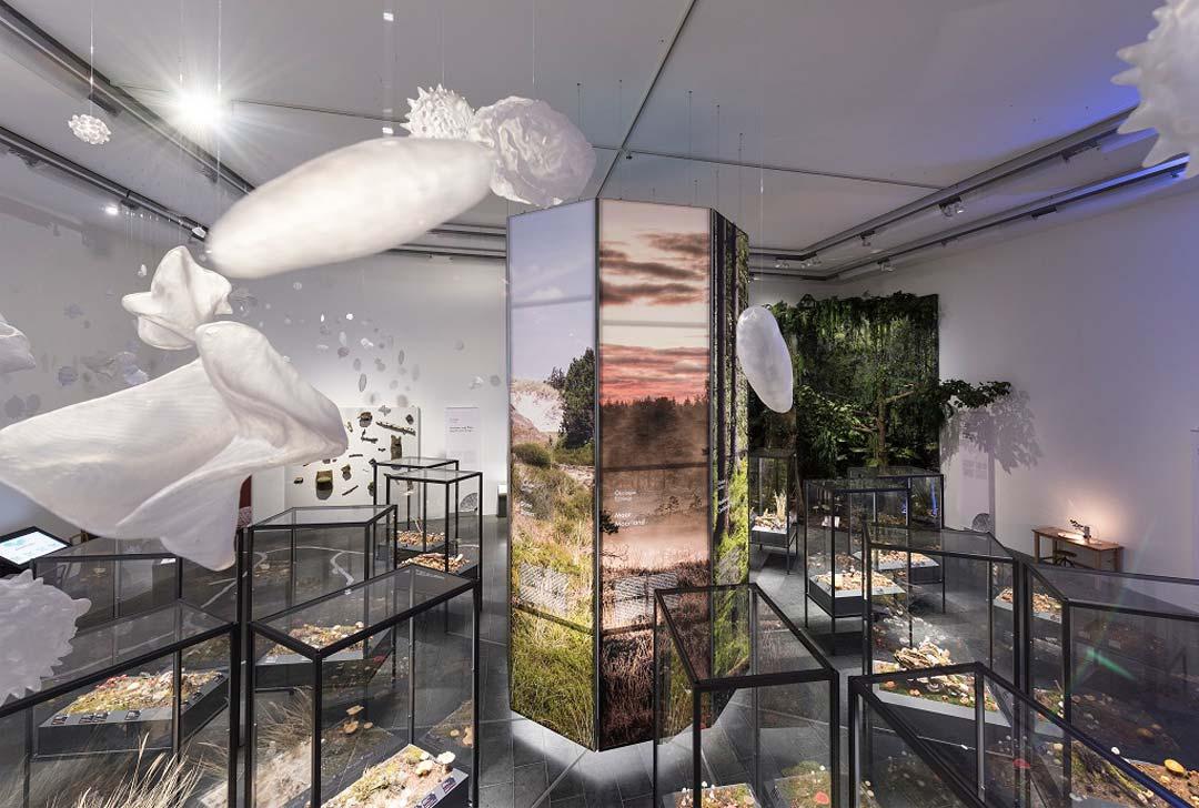 Die Vitrinen der Ausstellung wurden dank großzügiger Unterstützung der Alfred Weigle Stiftung ermöglicht. (Foto: Bernd Fickert)