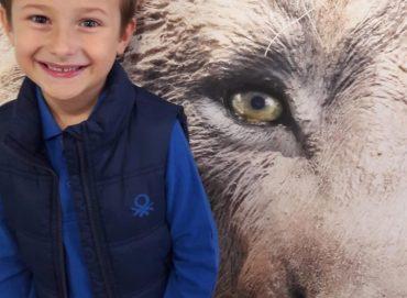 Findet die Ausstellung cool: Lucas (6) war auf Eiszeit-Safari und traf den Höhlenlöwen. (Foto: Geipel)